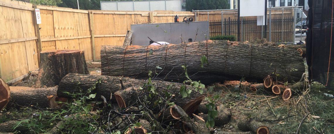 Staten Island Tree Company NY