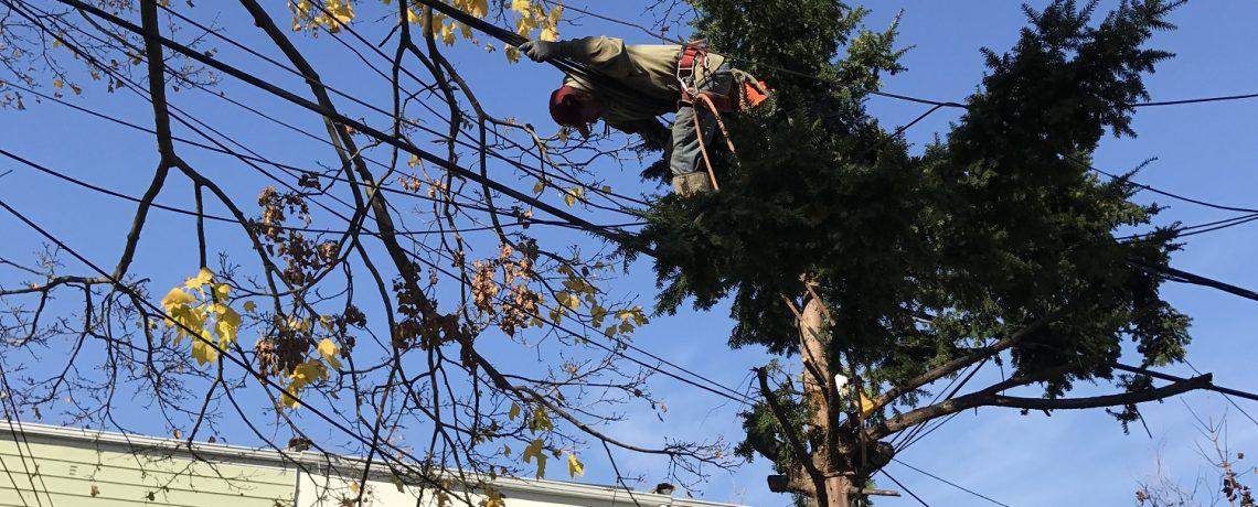 Staten Island Tree Service